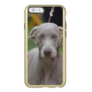 Adorable Weimaraner Incipio Feather® Shine iPhone 6 Case