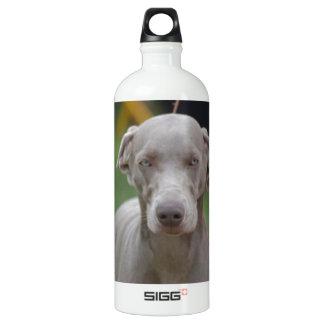 Adorable Weimaraner SIGG Traveler 1.0L Water Bottle