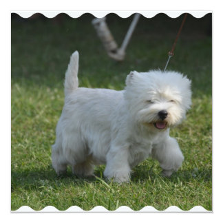 """Adorable West Highland Terrier 5.25"""" Square Invitation Card"""