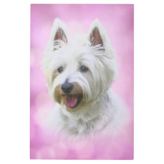 Adorable west highland white terrier metal photo print