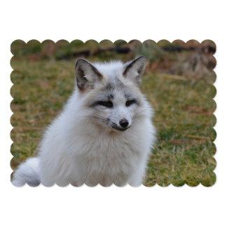 Adorable White Fox Card