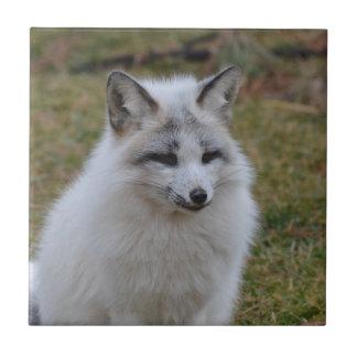 Adorable White Fox Tile