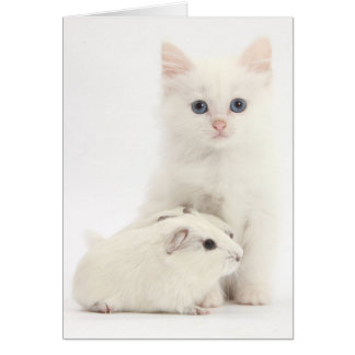 Adorable White Kitten with a white Guinea Pig. Card