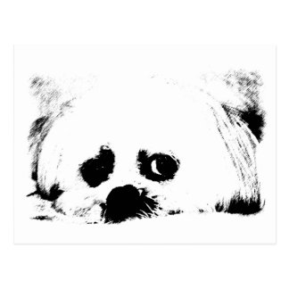 Adorable white Maltese puppy dog Postcard