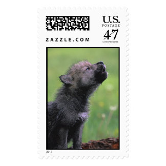 Adorable Wolf Puppy Postage Stamps