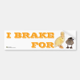 Adorable Yellow and Gray Ducklings Photograph Car Bumper Sticker
