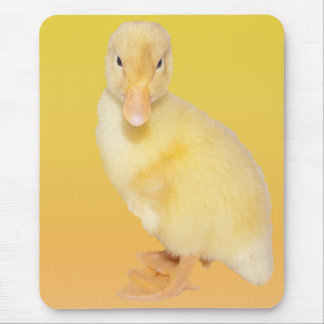 Adorable Yellow Duckling Photograph Mouse Pad