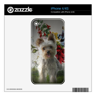 Adorable Yorkie and Rose Photo Painting Gifts Decals For iPhone 4S