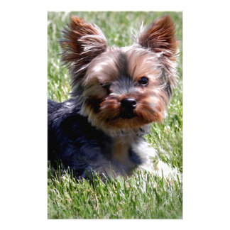 Adorable Yorkie Multiple Products Selected Stationery
