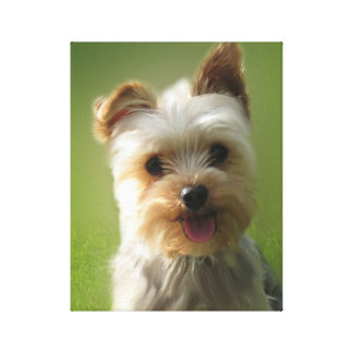 Adorable Yorkie Puppy Wrapped Canvas