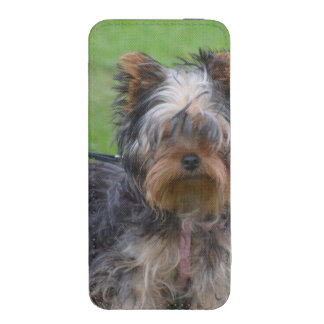 Adorable Yorkshire Terrier iPhone 5 Pouch