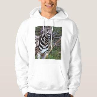 Adorable zebra on hoodies