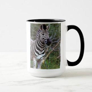 Adorable zebra on mug