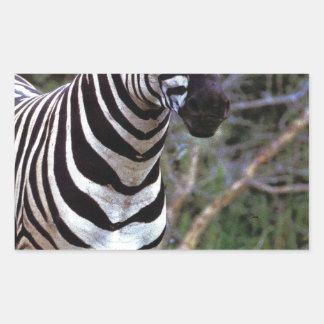 Adorable Zebra Rectangular Sticker