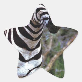 Adorable Zebra Star Sticker