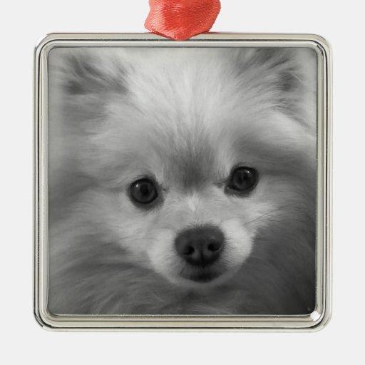 Adorably Cute Pomeranian Puppy Square Metal Christmas Ornament