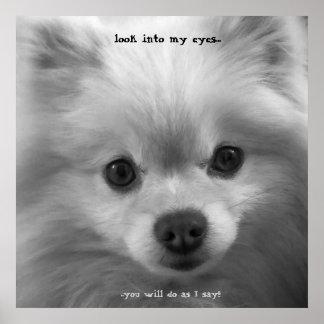 Adorably Cute Pomeranian Puppy poster print Print