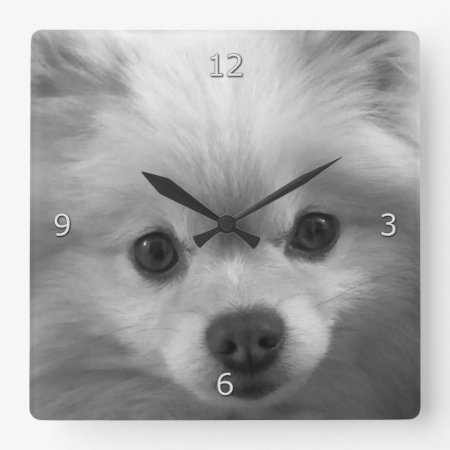 Adorably Cute Pomeranian Puppy Square Wall Clock