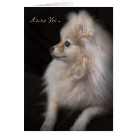 Adorably Cute Posing Pomeranian Puppy Card