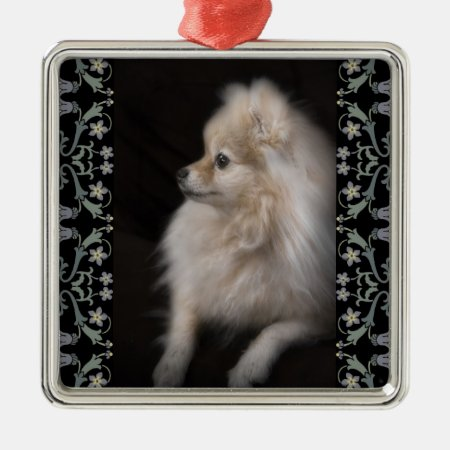 Adorably Cute Posing Pomeranian Puppy Metal Ornament