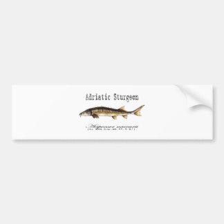 Adriatic Sturgeon Item Bumper Sticker