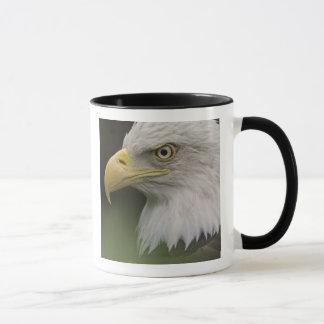 Adult Bald Eagle Portrait, Haliaeetus Mug