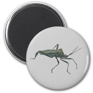 Adult Black Assasin Bug (Reduviid) Items 2 Inch Round Magnet