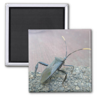 Adult Black Assasin Bug (Reduviid) Items 2 Inch Square Magnet