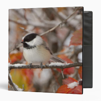 Adult Black-capped Chickadee in Snow, Grand Binder