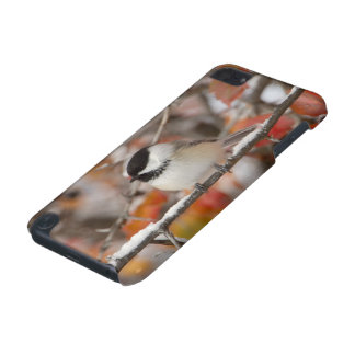 Adult Black-capped Chickadee in Snow, Grand iPod Touch (5th Generation) Covers