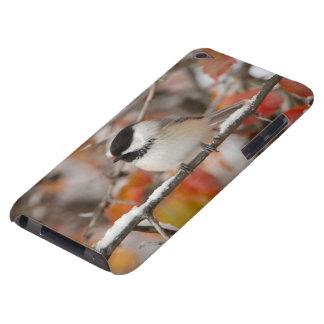 Adult Black-capped Chickadee in Snow, Grand iPod Touch Case-Mate Case