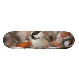 Adult Black-capped Chickadee in Snow, Grand Skateboard Deck