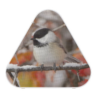 Adult Black-capped Chickadee in Snow, Grand Speaker