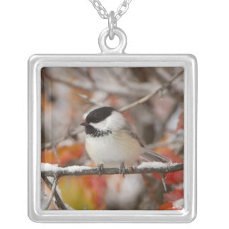 Adult Black-capped Chickadee in Snow, Grand Square Pendant Necklace