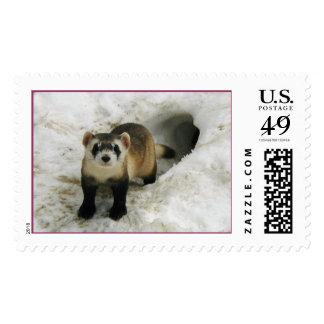 Adult Black-footed ferret Male  Postage