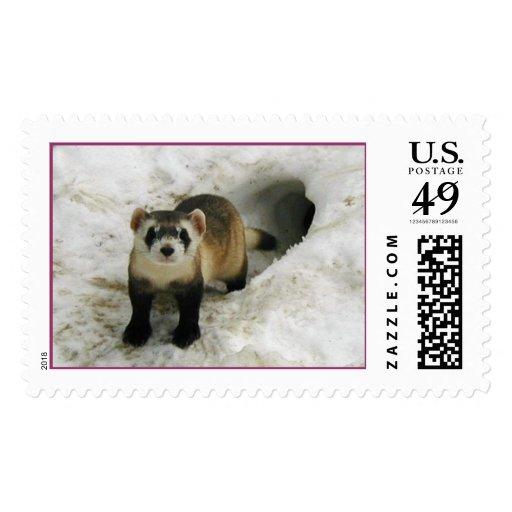Adult Black-footed ferret Male  Postage Stamp