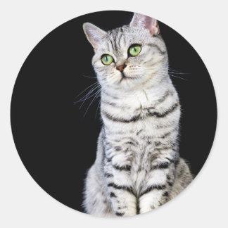 Adult british short hair cat on black background classic round sticker