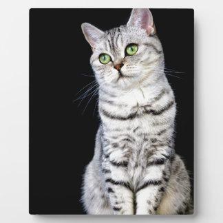 Adult british short hair cat on black background plaque