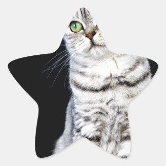 Adult british short hair cat on black background star sticker