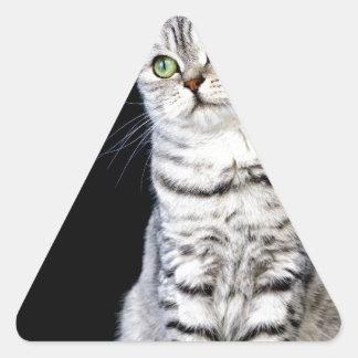 Adult british short hair cat on black background triangle sticker