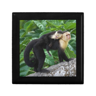 Adult Capuchin Monkey Carrying Baby On Its Back Trinket Boxes
