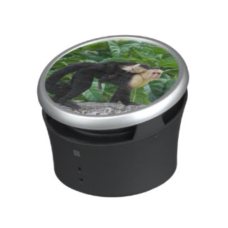 Adult Capuchin Monkey Carrying Baby On Its Back Speaker