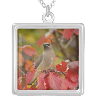 Adult Cedar Waxwing on hawthorn with snow, 2 Square Pendant Necklace
