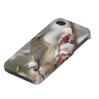 Adult Cedar Waxwing on hawthorn with snow, 3 Cover For iPhone 4