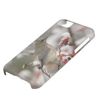 Adult Cedar Waxwing on hawthorn with snow, 3 Cover For iPhone 5C