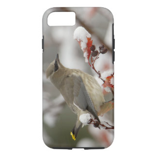 Adult Cedar Waxwing on hawthorn with snow, 3 iPhone 7 Case