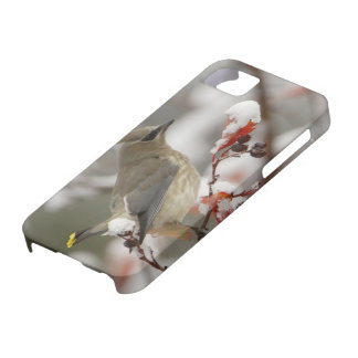Adult Cedar Waxwing on hawthorn with snow, 3 iPhone SE/5/5s Case