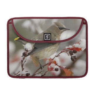 Adult Cedar Waxwing on hawthorn with snow, 3 Sleeves For MacBook Pro