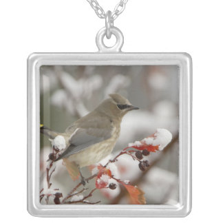 Adult Cedar Waxwing on hawthorn with snow, 3 Square Pendant Necklace