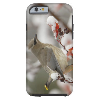 Adult Cedar Waxwing on hawthorn with snow, 3 Tough iPhone 6 Case